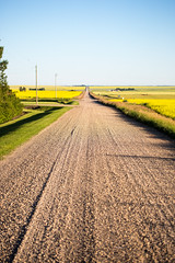 5C8A7678 (pbruch) Tags: calgary prairies grain canola growing seaon flowers flowering rape seed dirt road endless horizons