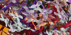 floral (ojoadicto) Tags: flowers flores nature naturaleza digitalmanipulation manipulaciondefotos artisticphotography abstract