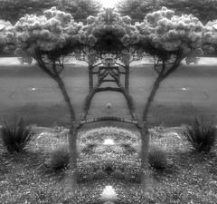 Nutty tree (jnspet) Tags: bw blackwhite blackandwhite monochrome fun mirrorimage tree