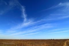 Yolo Bypass Wildlife Area (trifeman) Tags: 2016 october california fall autumn canon 7d canon7dmarkii yolobypasswildlifearea yolo yolobypass yolocounty tokinaatxpro1116mm28dxii tokina1116mm tokina