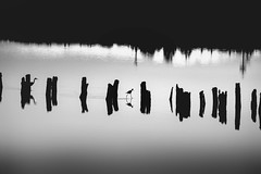 i follow you (s@brina) Tags: monochrome suspended reflections pond black white