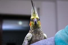 Bird (পাখি) (Islamtarikul67) Tags: bird পাখি