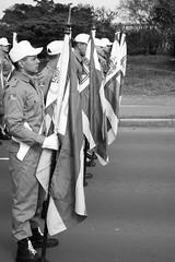 DSC_5211 (neyde zys) Tags: bandadabrigada brigadamilitar desfilefarroupilha gauchos indumentaria prendas tradicao