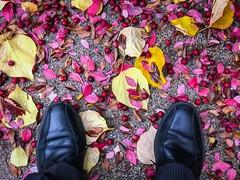 Autumn leaves and crabapples on temple square in Salt Lake City Utah. (enoughfleece) Tags: utah autumn fall colors shoes lookingdown saltlaketemple temple