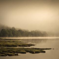 Loch Eil (Roksoff) Tags: lochlinnhe coran onich fortwilliam water trees forestry pine larch misty fog landscape sea scottishhighlands scotland lochaber coranferry nikond810 nikond800 70200mmf28 autumn locheil mist leefilters