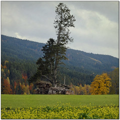 In My Neighbourhood (pixel_unikat) Tags: mhlviertel upperaustria austria landscape autumn tree timber