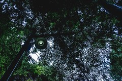 Looking up https://500px.com/photo/179222557/ (KT.pics) Tags: 500px light ominous ktpics stockphoto trees leaves nature japan forest looking up atmosphere mood moody art fine wandering shadow delicate dark darkness wall electric silence exploration
