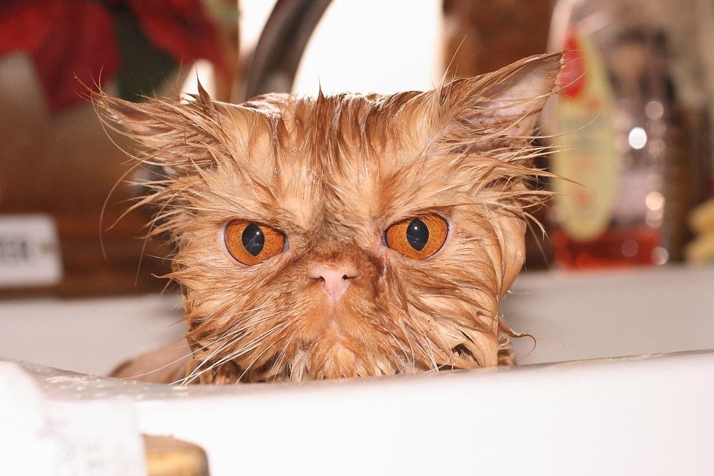 blog wet pussy pussy vet