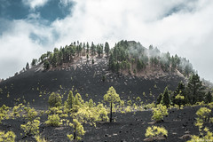 Volcan et Cumulus! (Arthur Janin.) Tags: arthur janin leica digital la palma canarias canaries island ile isla bonita paysage ladnscape sanieux sapin tree nature forest volcan volcano volcanic cactus stars milky way voie lacte long exposure
