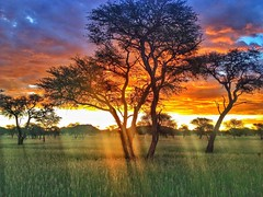 Susnet Stalhard (AGHANSEN) Tags: namibia sunsets amazing lightburst wonderful besttime grootfontein mariental windhoek africa camelthorn fields bush grass mountains trees