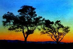 (Christopoulos) Tags: trees sunset monterey sundown silhouettes textured passengerside picmonkey