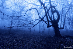 horror tree at night (Mimadeo) Tags: blue light mist tree halloween nature monochrome silhouette misty fog mystery night forest dark landscape evening leaf scary woods mood gloomy darkness magic fear ghost gothic foggy evil surreal creepy spooky fantasy romania mysterious horror trunk nightmare transylvania enchanted