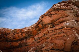 Chinchilla en Desierto de Dali, Uyuni - Bolivia.