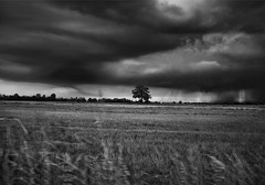 odorosi di pioggia e cielo (UBU ♛) Tags: blancoynegro blackwhite noiretblanc blues biancoenero bluacqua unamusicaintesta landscapeinblues bluubu luciombreepiccolicristalli ©ubu
