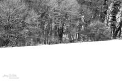 Winter (Jérémy De Gobbi Photographie) Tags: wood winter france canon hiver lorraine foret 70200 moselle