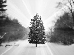 Winter Flurries (BlueisCoool) Tags: winter blackandwhite snow nature dark landscape photography photo nikon flickr foto image massachusetts picture newengland flurries coolpix capture foxboromassachusetts l330 winterflurries
