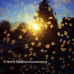 Cold. Frosty. Sunrise. (Heather Annee Photography) Tags: winter cold sunrise season frost photographer indiana windy naturallight naturelover frigidtemps iphoneography iphone6 heatherannee heatheranneephotography