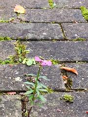 Uberlebenskampf-06-1 (alois_roehrl) Tags: autumn nature leaves bayern deutschland herbst natur bltter frchte ingolstadt altern growingolder wasbleibtvomsommer