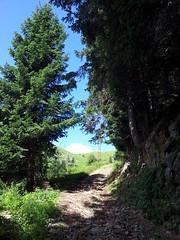 lungo l'antica via Priula verso il Passo San Marco