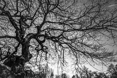 the first attempt of star trails (wazza1008) Tags: uk longexposure tree canon landscape star sheffield 5d retouch startrail 5dmarkii 5d2 5dmark2