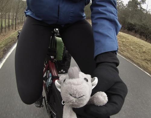 Ringo in Germany #r2s #adventure #adventuremascotte #cycletouring