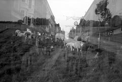 Sheep (Jim Davies) Tags: blackandwhite bw film monochrome 35mm accident doubleexposure mashup oxford boingboing analogue serendipity expired ilford fp4 2012 doubles 2014 cosmicsymbol developedathome olympus35dc filmswap ennoiretblanc ilfosol3 veebotique filmfilmforever