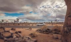 Joshua Tree Adventure (mnlphotography) Tags: travel storm mountains rain clouds canon landscape desert cloudy joshuatree adventure epic 70d
