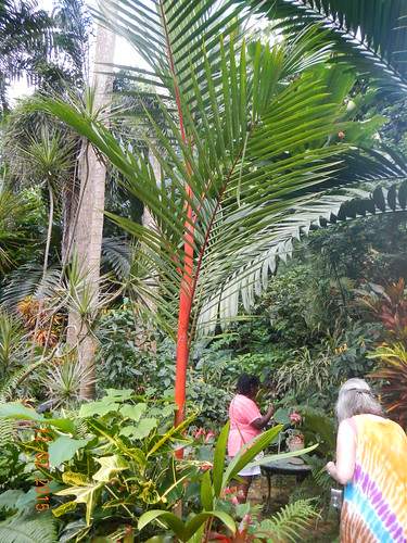 Barbados Hunte's Garden