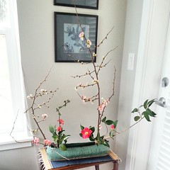My ikebana corner.  Today quince and camelia.
