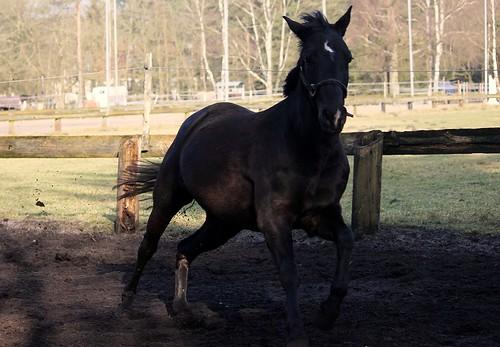"Pferde im Winter 2015 • <a style=""font-size:0.8em;"" href=""http://www.flickr.com/photos/69570948@N04/16518847412/"" target=""_blank"">Auf Flickr ansehen</a>"