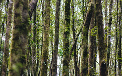 IMG_9478 (seejayarr) Tags: trees light reflection green nature water photography 50mm australia brisbane queensland goldcoast springbrooknationalpark canon60d