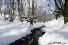 Otzarreta helado (Pruden Barquin) Tags: naturaleza nieve paisaje fotografia helado paisvasco bosques nikond610 prudenbarquin