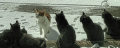 The Cat Colony Interviews a Prospective Member (joeldinda) Tags: winter snow home weather yard drive outdoor cam sony cybershot deck driveway february pocket mulliken sonycybershot 2800 2015 pocketcam sonydsch55 dsch55