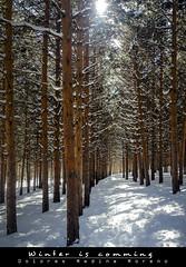 winter is coming (Dolme80) Tags: snow tree nature nevada sierra sierranevada