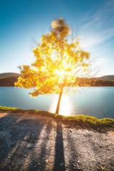- GOLDEN TREE - (Ruben Lopo) Tags: sun tree canon river landscape golden 5d usm ef nasty markiii 1635mm rubenlopo