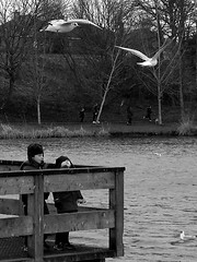 Watch The Birdie III (Count me out - in) Tags: boys kids children scotland pond edinburgh gull gulls portobello seabird seabirds lothian blackheadedgull feedthebirds larusridibundis figgatepark figgatepond