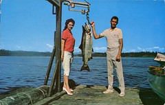 Tyee Fishing, Vancouver Island, BC (SwellMap) Tags: postcard vintage retro pc chrome 50s 60s sixties fifties roadside midcentury populuxe atomicage nostalgia americana kitsch animal animals wildlife pose posing fish fishing hunting