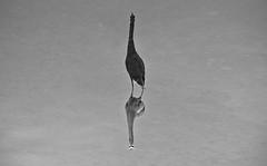 Reflection (action41.krelli) Tags: thought thinking consideration contemplation study deliberation pondering meditation musing rumination cogitation brooding agonizingrarecerebration
