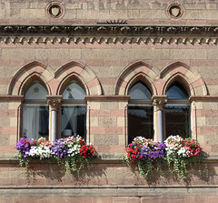 Chester Townhall window boxes IMG_7541 (rowchester) Tags: window boxes flower
