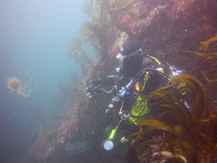19 July 2016 - Scillies Trip PICT0238 (severnsidesubaqua) Tags: scillies scilly scuba diving