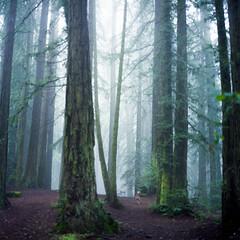(-Alberto_) Tags: hasselblad500cm redwoods nature california 120film fujicolor160 foggy misty