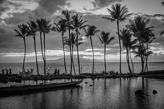 Slipping Away (Thomas Hawk) Tags: grandwailea hawaii maui wailea waldorfastoria waldorfastoriagrandwailea beach bw clouds humuhumu humuhumunukunukuapuaa palmtree restaurant sunset tree fav10 fav25 fav50