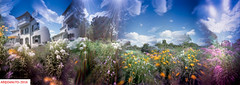 The light of summer-II (DelioTO) Tags: 6x17 autaut botanical canada city closeup colours curved f175 flowers garden july landscape natparks ontario panoramic pinhole portra trails