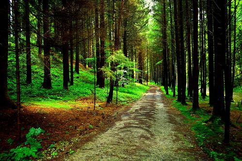 Bayrischer Wald (Germany)