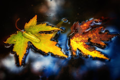 Buoyant Nature (Bobby Palosaari) Tags: autumn fall leaves nature reflection water