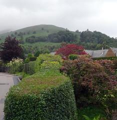 Luss, Scotland (vmyk) Tags: luss scotland garden hedge