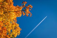 Golden Autumn Colors (bobbybee2000) Tags: fujixt10 outdoor sun light herbst blauerhimmel goldeneroktober herbstfarben october colors licht herbststimmung fujicolors fujinon sptsommer wonderfulday bluesky