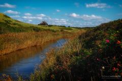 Henne Mlle (Thomas Haeusler) Tags: danmark river jtland westjtland henne denmark jylland syddanmark