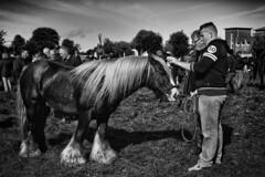 He's a fine beast (adrian.sadlier) Tags: ballinasloehorsefair2016 ballinasloe horsefair stallion chestnut selling tradition