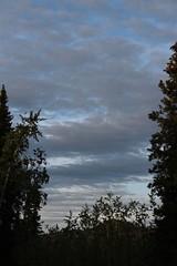 Dawn (demeeschter) Tags: canada yukon territory klondike highway lake mountain scenery landscape nature wildlife fire forest river minto resort bald eagle dawn sunrise
